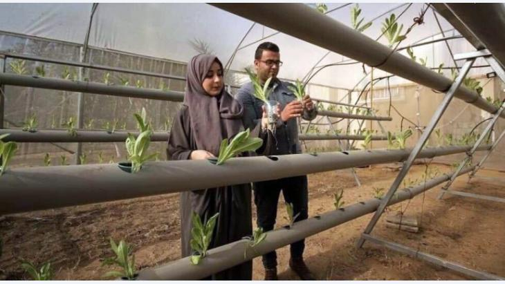 The blockade makes life difficult in so many ways for the people of Gaza.  Safiyya and Azem Abu Daqqa, both qualified agricultural engineers, are just two young people who are taking the initiative and using creativity and innovative spirit to overcome the challenging situation in the Strip. They are seen here inspecting seedlings in their hydroponics greenhouse